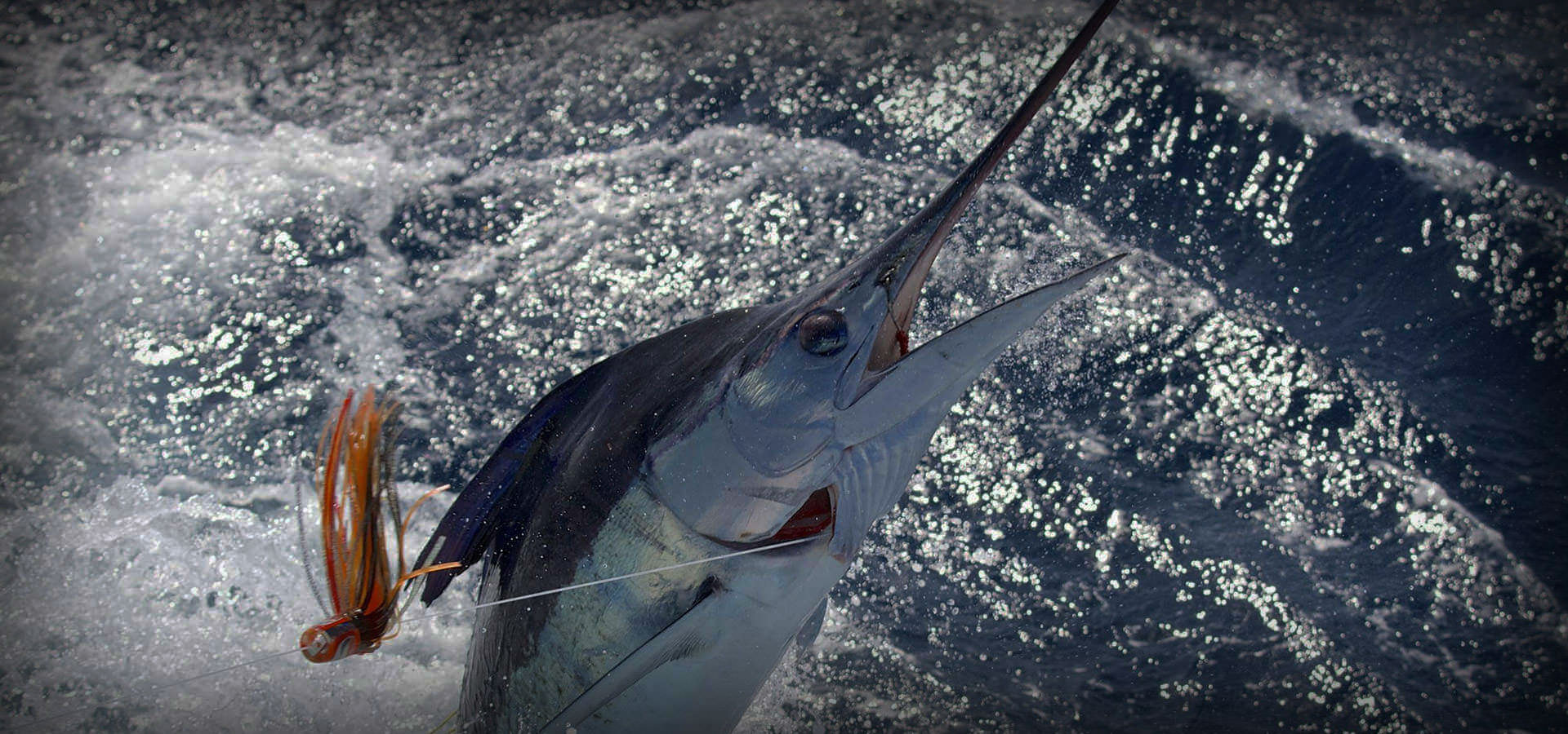 ultimate-fishing-charters-marlin-1-1